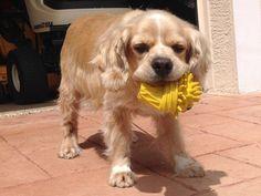 Bailey Boy Double Ear Surgery | Pet Expenses - YouCaring.com