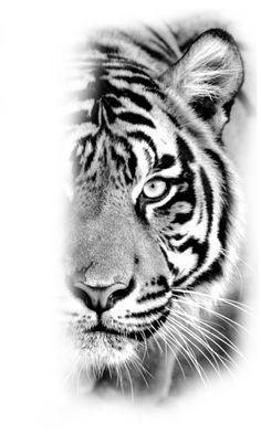 Tiger Eyes Tattoo, Big Cat Tattoo, Owl Tattoo Drawings, Tigeraugen Tattoo, Yogi Tattoo, Lion Tattoo, Tiger Drawing, Tiger Art, Girly Tattoos