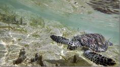 Panamá declara dos nuevas áreas protegidas http://www.inmigrantesenpanama.com/2015/09/24/panama-declara-dos-nuevas-areas-protegidas/