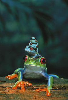 Frogs | Animals | Hardboards | Wall Decor | Plaquemount | Blockmount | Art | Pictures Frames and More | Winnipeg | MB | Canada