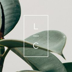 Cincinnati-based design studio that specializes in branding for creative entrepreneurs and small businesses. Organic Logo, Organic Brand, Corporate Design, Brand Identity Design, Corporate Branding, Arquitectura Logo, Minimal Graphic Design, Modern Logo Design, Skincare Branding