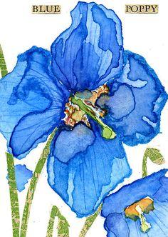 'Blue Poppy' by Carol Kroll Watercolor Poppies, Easy Watercolor, Watercolor Cards, Watercolor Paintings, Watercolours, Botanical Illustration, Watercolor Illustration, Pictures Of Poppy Flowers, Blue Poppy