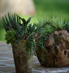 Indoor Succulent Arrangements