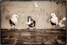 Sophie-Photographe-street-art-animaux-26
