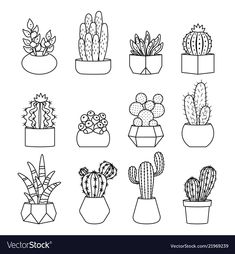 20 Creative step by step cactus and succulent doodle ideas for your bullet journal
