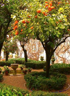 An orange garden in Seville, Spain. P1020774
