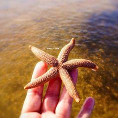 Not all stars belong in the sky #neverlive #alwaysreturn #starfish #seastar #islandlife #beachgirl #beachlover #islandgirl #sandbar #saltwater #staysalty #saltlife #sanibelgirl #sanibelstar #captiva #captivaisland #sanibelisland #sanibel #ftmyersbeach #swfl #naples #ftmyers #oceanlove #wildchild