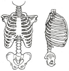 "For all paediatric therapists - this month's blog talks about one of my favourite relationships, the pelvis and rib cage, and why ""You can't have one without the other""."