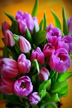 Purple Tulips, Artist Bio, Colorful Wall Art, Flower Market, Flower Pictures, Floral Watercolor, Fine Art Paper, Flower Arrangements, Beautiful Flowers