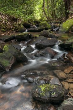 This beautiful rain forest creek will put you in a zen mood #photography #nature