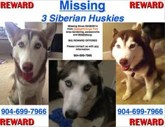 183 Best Lost And Found Siberian Huskies Images In 2019 Siberian