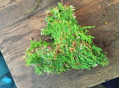 Lagde formen ut fra det grønne med litt tråd slik at formen skulle holde