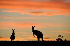 Aussie Silhouette - Chris Samuel