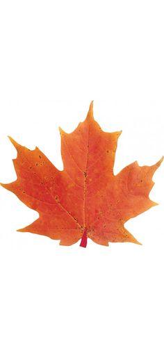 Leaf Magnet   Paper House