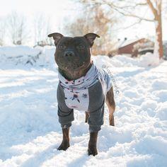 #dog #dogs #dogsoftwitter #pets #pet #puppy #puppies #puppylove #puppiesofinstagram #dogsofinstaworld #dogsofig  #puppygram #dogsofig #pets