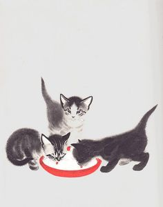 Pretty soon they could lap milk almost as well as grown-up cats by katinthecupboard on Flickr.