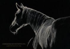 Monochrome Horse by AmBr0.deviantart.com on @DeviantArt