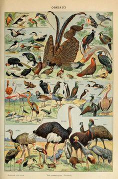 Oiseaux, Le Larousse pour tous