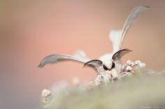 https://flic.kr/p/pxTUmP | Silkworm Moth