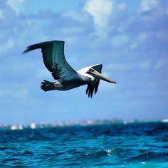 amazing flight Cool Instagram Pictures, Bald Eagle, Amazing, Animals, Animales, Animaux, Animal, Animais