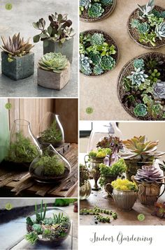 Succulents and Terrariums Ideas / thistle & fern