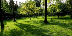 Ramna Park, the most beautiful place in Dhaka