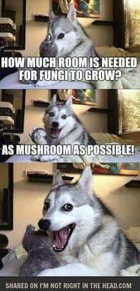 I've so mushroom for such jokes