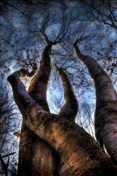 Freak of nature - Darko Geršak Photography Tree Trunks, Photo B, Winter Trees, Blue Tones, Tree Of Life, Natural Wonders, Shades Of Blue, Beautiful World, Mother Nature