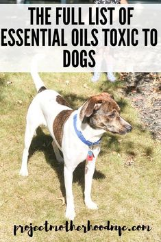 Essential Oils That Are Toxic to Dogs - Project Motherhood #dogs #dogmom #essentialoils #EssentialOilsForSkin