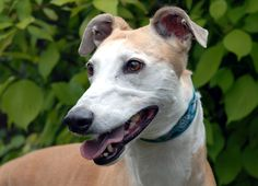 Ten things you didn't know about #Greyhounds