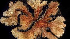 Hudební video WoodSwimmer je složeno z tisíců řezů stromu