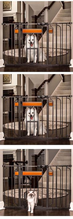 Fences and Exercise Pens 20748: Carlson Pet Products Design Paw Black Metal Extra-Wide Pet Gate -> BUY IT NOW ONLY: $47.69 on eBay!