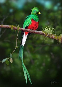 Los colores de México en un ave, el quetzal, ave apreciada por sus plumas