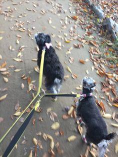 가을길 산책중인 체리와 베리