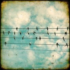 bird on a wire #YorkshireLinenand#Dreamduvetcover