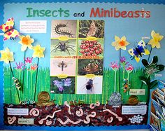 Minibeast and insect display Teaching Displays, Class Displays, School Displays, Classroom Displays, Primary Science, Teaching Science, Preschool Science, Teaching Ideas, Minibeasts Eyfs