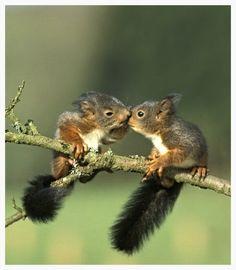 Baby Squirrels