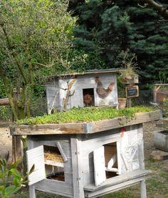 Créer un poulailler avec toit végétalisé