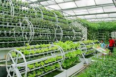 What is Aquaponics? With our ever increasing need to find solutions to environmental concerns, aquaponic gardens serve as a sustainable model of food