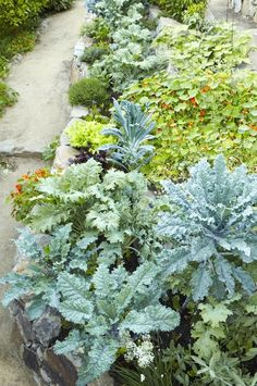 Inspirational images and photos of , Kitchen Gardens : Gardenista