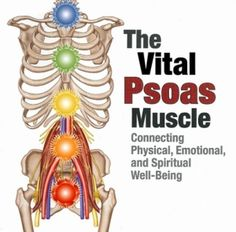 psoas muscle                                                                                                                                                                                 More