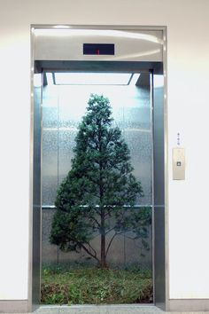 Myeongbeom Kim - Elevator Yew Tree (2011)