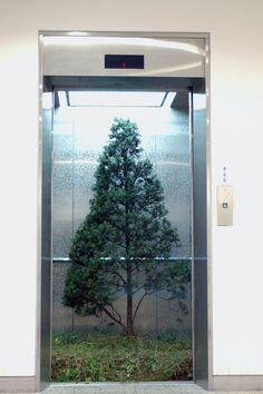 Myeongbeom Kim - Elevator Yew Tree (2011)