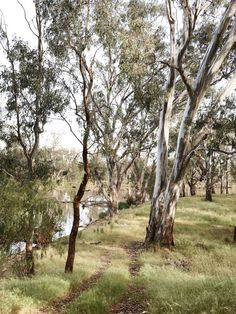The track leading down to the waterhole just below Matt and Lentil's house. Photo – Eve Wilson for The Design Files. Beautiful World, Beautiful Places, Beautiful Scenery, Australia Landscape, Australian Bush, Vides, All Nature, The Design Files, The Ranch