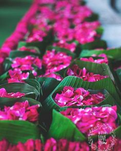 How To Plan An Eco-Friendly Wedding! *Tips & Suggestions! - How To Plan An Eco-Friendly Wedding! *Tips & Suggestions! Indian Wedding Decorations, Flower Decorations, Indian Weddings, Wedding Themes, Wedding Images, Wedding Tips, Banana Leaves Image, Natural Plates, Packaging