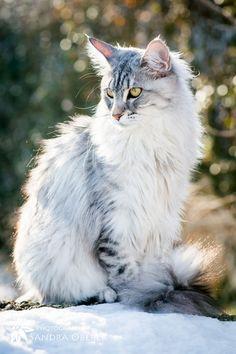 Such poise!