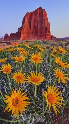 Wildflowers NM