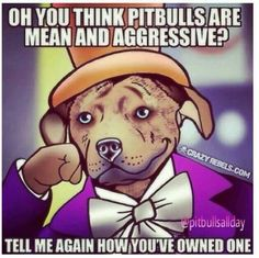 I haven't owned a Pitbull yet but I have been around them. And I really want one of my very own. :D