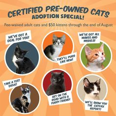 "The Great Plains SPCA in Kansas has a wonderful adoption poster for ""Certified Pre-Owned Cats"". They also adapted this image for their Facebook Page Cover Photo. Colorful, inviting and a play on the certified pre-owned luxury car ads."