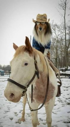 Funny Animal Pictures - View our collection of cute and funny pet videos and pics. New funny animal pictures and videos submitted daily. Funny Horses, Funny Dogs, Funny Animals, Cute Animals, Horses And Dogs, Dogs And Puppies, Doggies, Beautiful Horses, Animals Beautiful